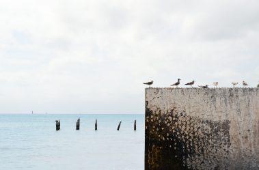 wood-sea-ocean-wall