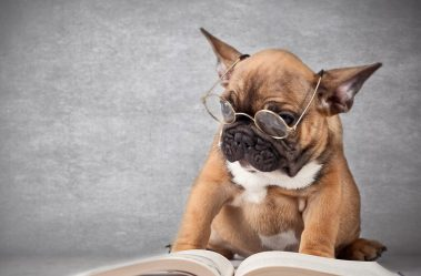 reading-puppy